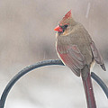 Snow Shower by Kay Pickens