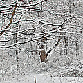 Snow White Forest by Aimee L Maher ALM GALLERY