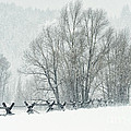 Snowy Day In The Tetons by Sandra Bronstein