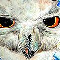 Snowy Owl - Female - Close Up by Daniel Janda