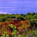 Splendor Of The Mount Of Beatitudes And The Sea Of Galilee by Sandra Pena de Ortiz