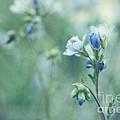 Spring Blues by Priska Wettstein