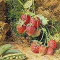 Strawberries And Peas by John Sherrin