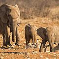 The Elephants Itching Rock by Paul W Sharpe Aka Wizard of Wonders