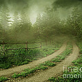 The Foggy Road by Boon Mee