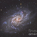 The Triangulum Galaxy by Reinhold Wittich
