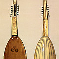 Theorbo, Made By Giovanni Krebar by Alfred James Hipkins