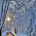 Through The Woods by Kristin Elmquist