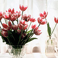 Tulip by Jeanette Korab
