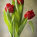 Tulipa by Jacky Parker