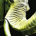 Tusk 1 - Dramatic Elephant Head Shot Art by Sharon Cummings