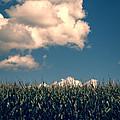 Vermont Cornfield by Edward Fielding