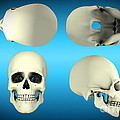 View Of Human Skull From Different by Stocktrek Images