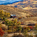 Viewing The Old Barn by Robert Bales