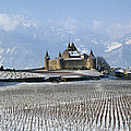 Vineyard Near Sion