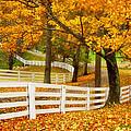 Virginia Horse Country