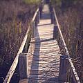 Walkway Through The Reeds Appalachian Trail by Edward Fielding
