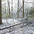 Winter Fallen Tree by Thomas R Fletcher