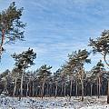 Winter Forest Covered With Snow by Dirk Ercken