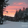 Winter Sunset by Jeanette French