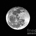 Wolf Moon Waning by Al Powell Photography USA