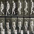 Woman Descending Steps by Eadweard Muybridge