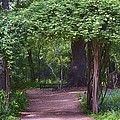 Zilker Botanical Tree Arbor by Kristina Deane
