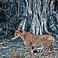 Alert Cheetah by Darcy Michaelchuk