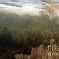 Algae In A Frozen Pond by Ted Kinsman