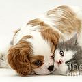 Dog And Cat by Jane Burton