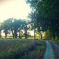 Landscape Near Mauvezin by Sandrine Pelissier