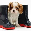 Puppy With Rain Boots by Jane Burton