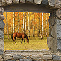 Stone Window View And Beautiful Horse by James BO  Insogna