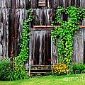 The Old Shed by Perry Webster