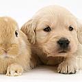 Rabbit And Puppy by Jane Burton