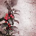 Holly Branch  by Carlos Caetano