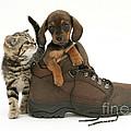 Kitten And Puppy by Jane Burton