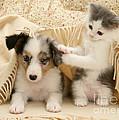 Kitten And Pup by Jane Burton