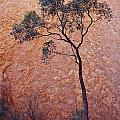 A Desert Bloodwood Tree Against The Red by Jason Edwards