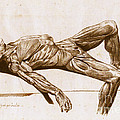 A Flayed Cadaver by Science Source