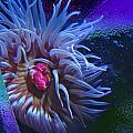 A Sea Anemone by Natalya Shvetsky