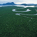 Aerial View Of The Salak River. Mount by Tim Laman