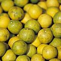 An Enticing Display Of Lemons by Jason Edwards