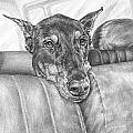 Are We There Yet - Doberman Pinscher Dog Print by Kelli Swan
