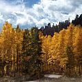 Autumn Splendor by Carol Cavalaris