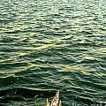 Back To The Sea by Joe Jake Pratt
