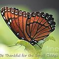 Be Thankful by Carol Groenen