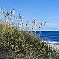 Beach Dunes. by John Greim