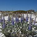 Beach Flora by Charles Warren