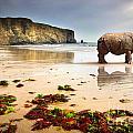 Beach Rhino by Carlos Caetano